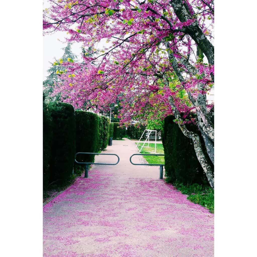 Sunday Something - Pink Petal Paradise