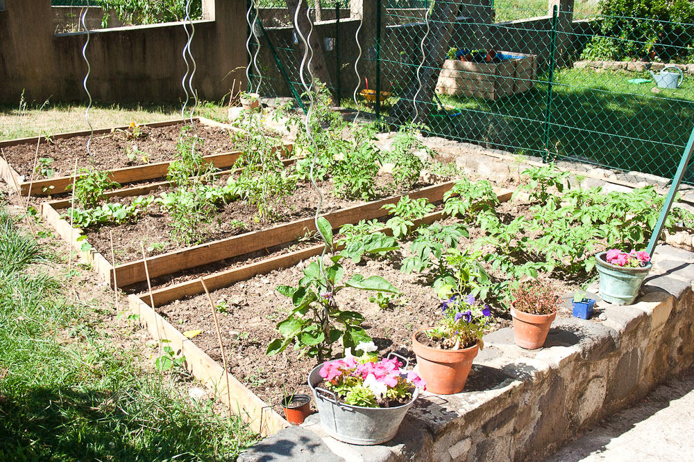 The Garden in June at Callaloo Soup -2
