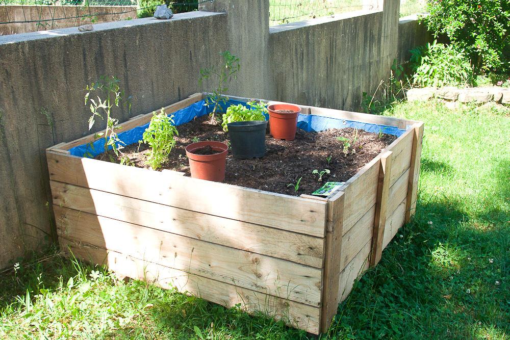 The Garden in June at Callaloo Soup -4