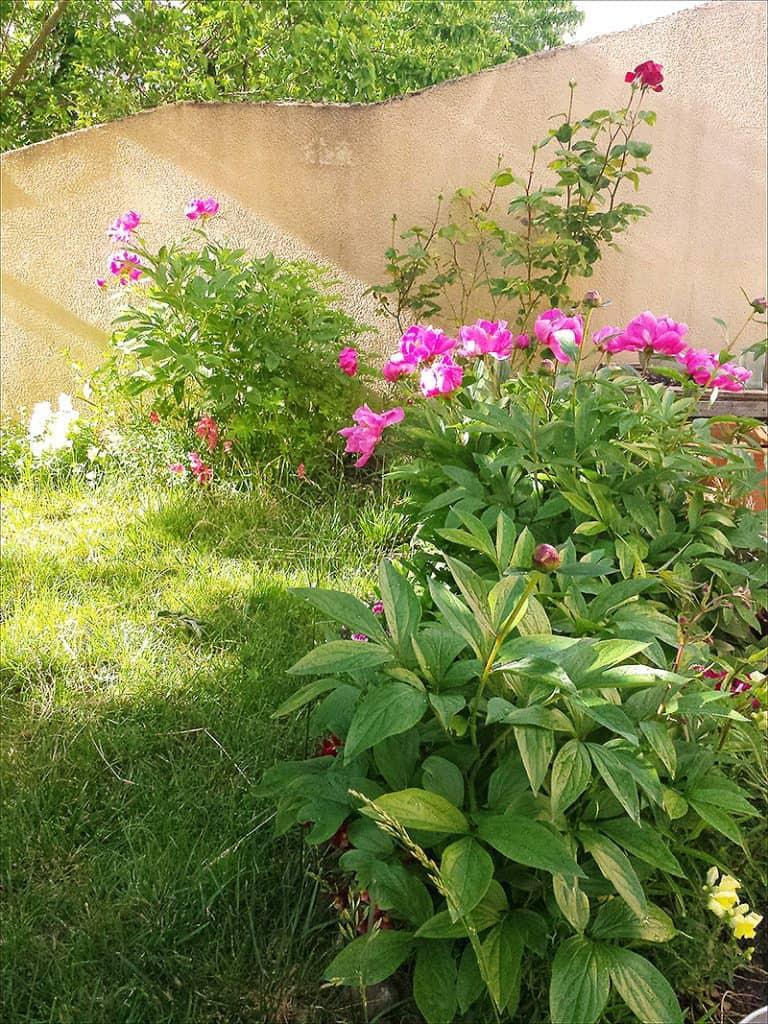 i have garden fever - Garden Fever
