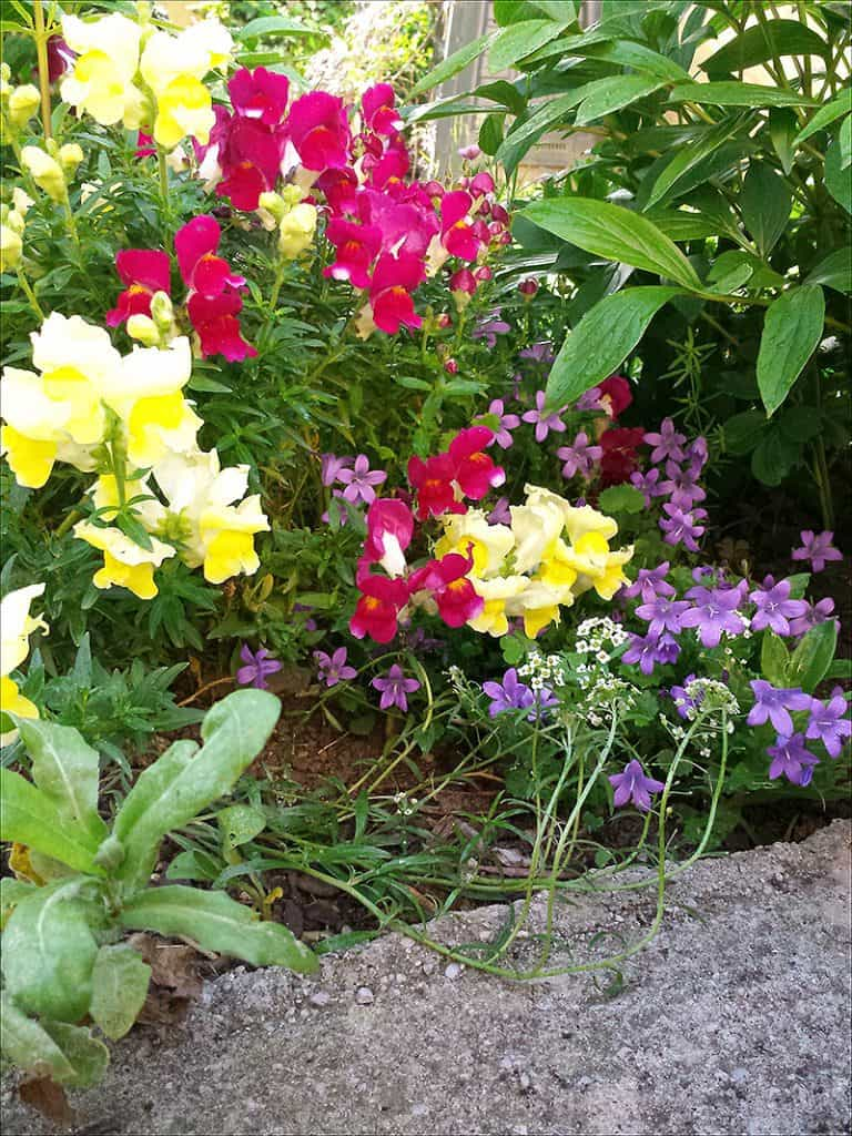 I Have Garden Fever - Blooms