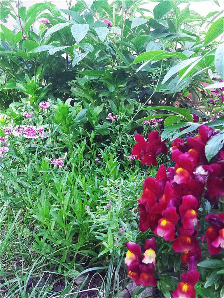I Have Garden Fever - Blooms2